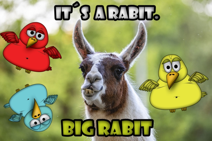 it is a rabit - fat fart birds